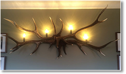 Spider Wall Light