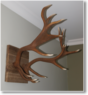Red Deer Recycled Shield