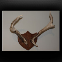 Cast Rusa Deer Pair Mounted